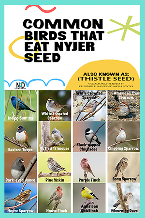 Birds That Eat Nyjer Thistle Seed At Feeder