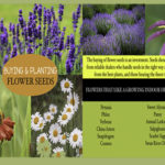 Buying and Planting Flower Seed